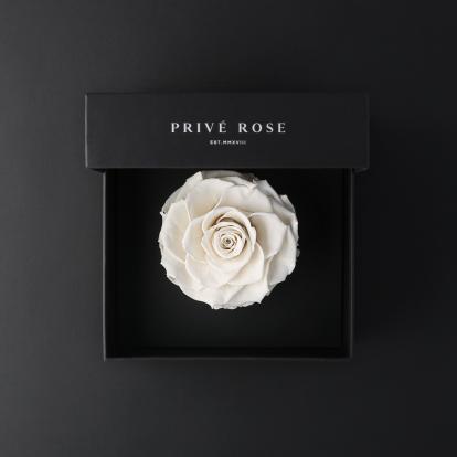 بريفي روز أبيض PRW11