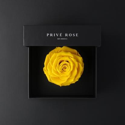 بريفي روز أصفر PRY15
