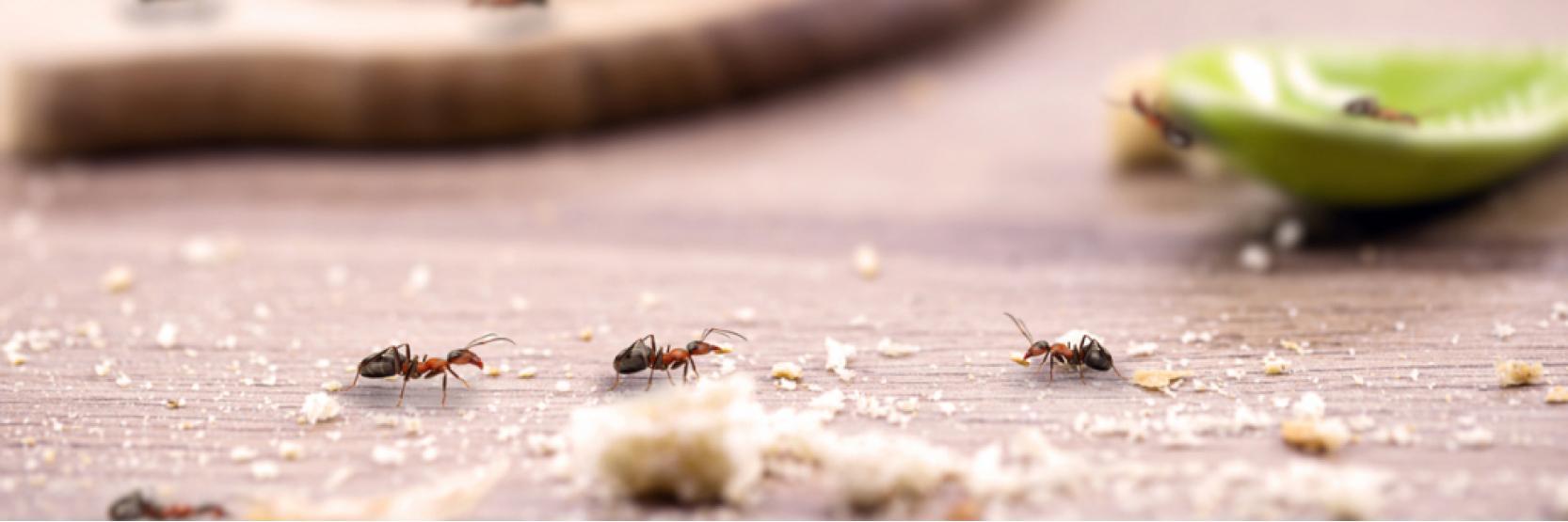 كيفية التخلص من النمل بالمنزل